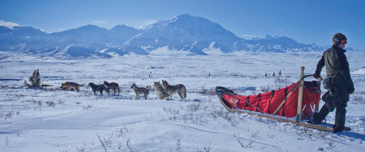 Illustrasjonsbilde hundekjøring med slede på snø