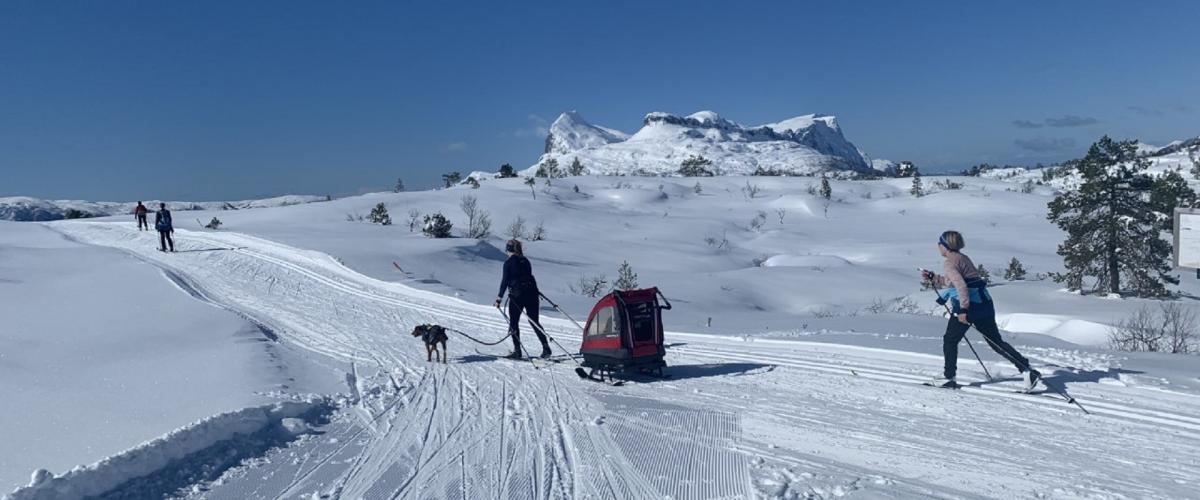 Skiløparar i godt preparert turløype. Kvamshesten i bakgrunnen