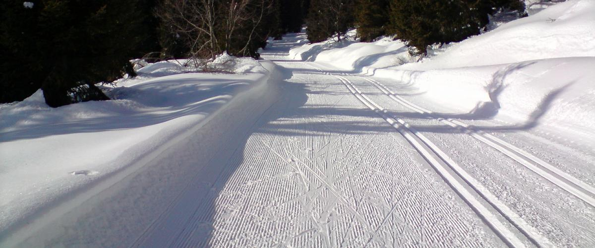 Skispor illustrasjonsbilde