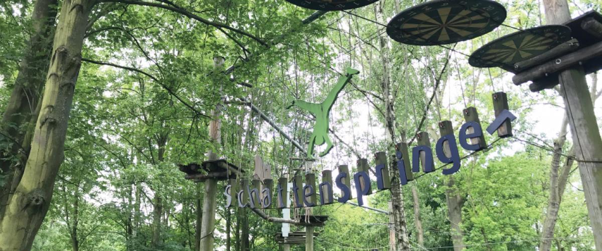 Klatrepark, skog med platåer og liner.